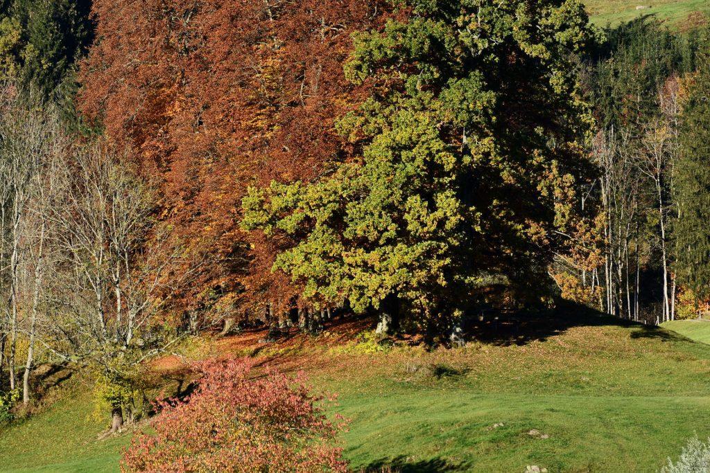 Buchenhain mit Laub