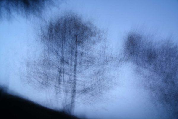 Zwei Birken vor dem Abendhimmel – 6 von 40